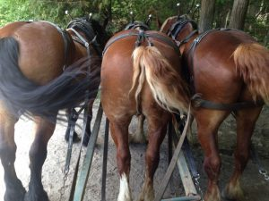 Meet Chris, Angel, & Bree.  Biggest Horses Butts Ever!